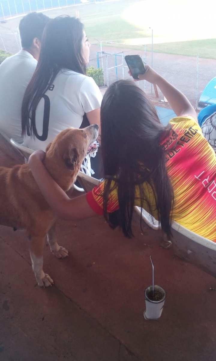 собака на стадионе рис 2