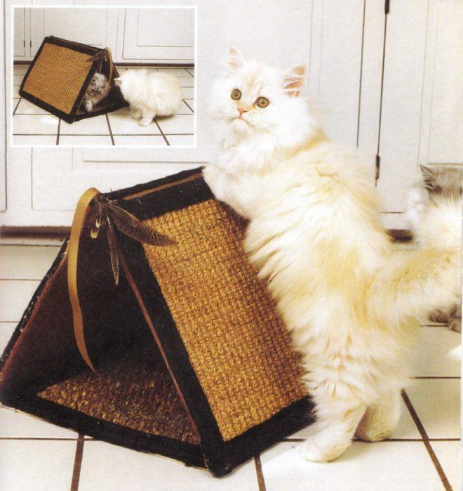 кот возле домика
