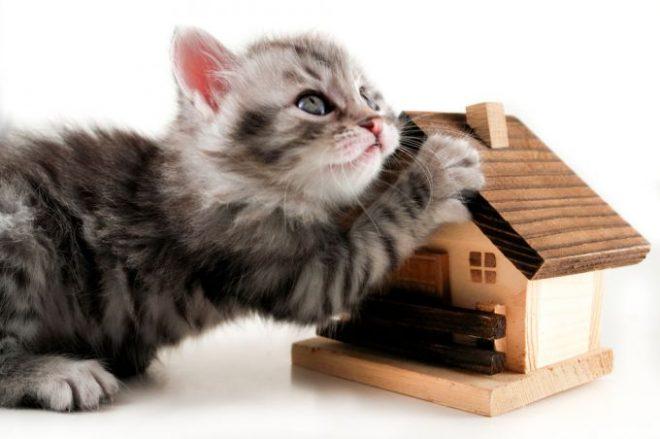 кошка и домик
