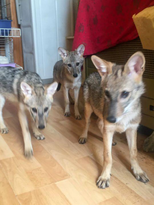 трое щенков в доме