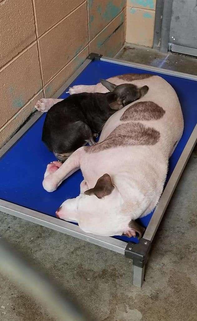 две собаки спят