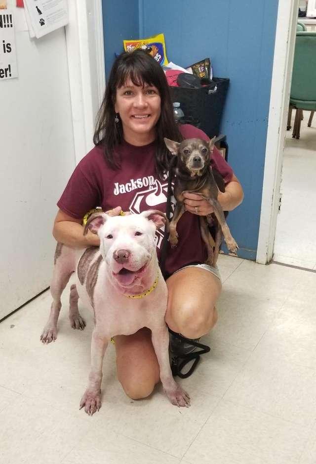 две собаки и девушка