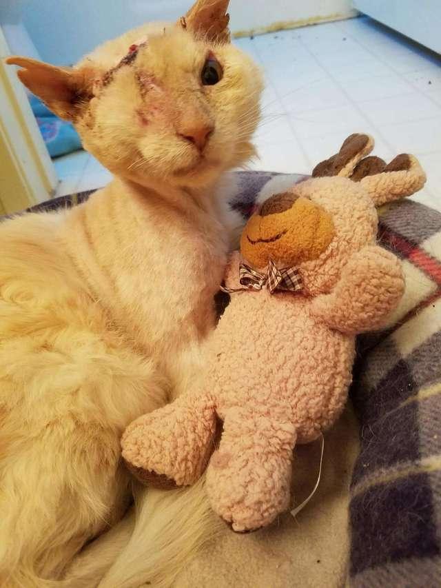 больной кот с игрушкой