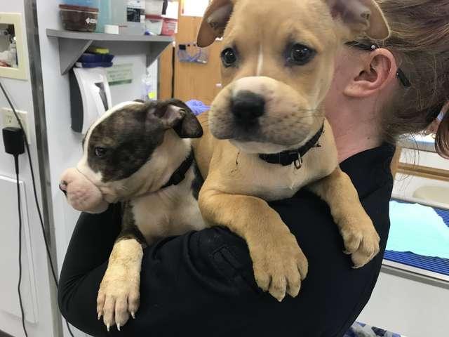два щенка на руках