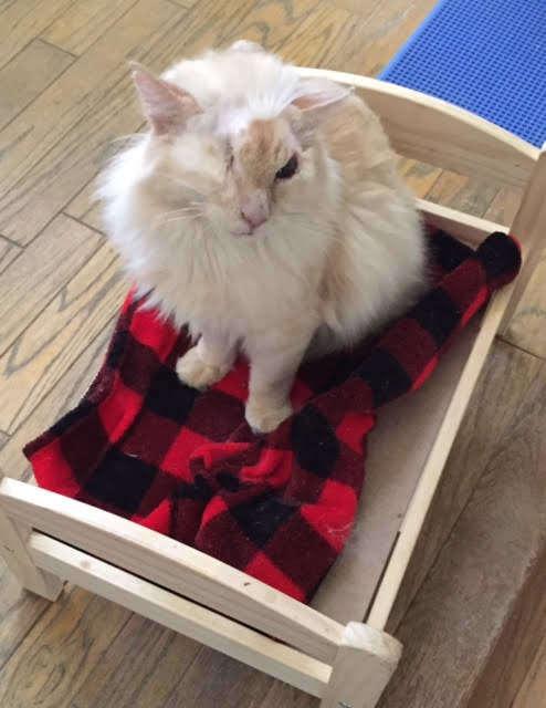 больной кот в коробке
