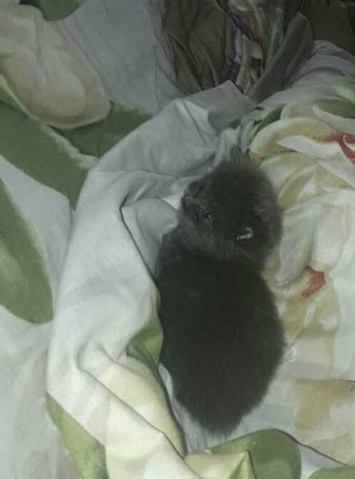 котенок в кровати