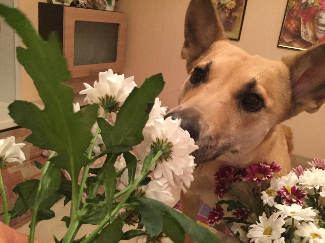 собака нюхает цветы