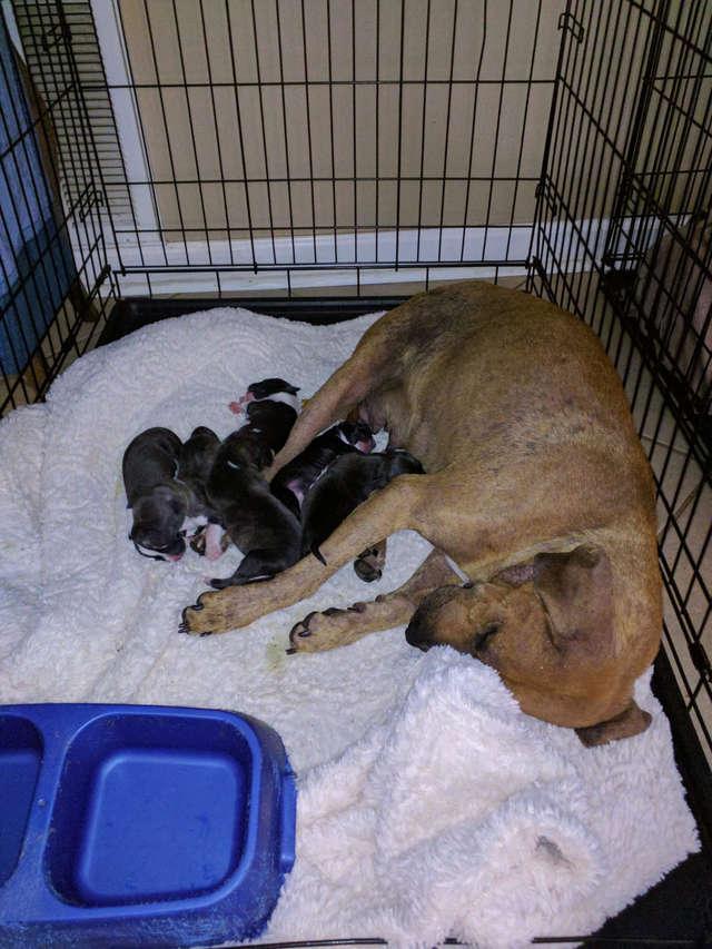 мамочка и щенки