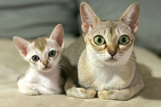 кошка и котенок на кровати