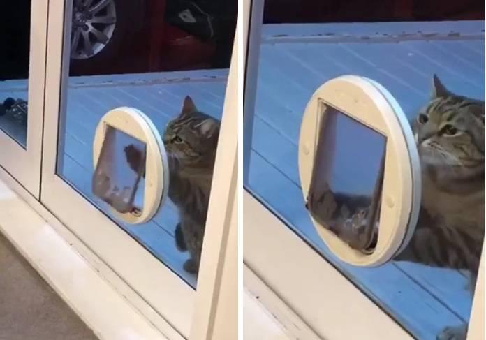 кот пролезает в дверь