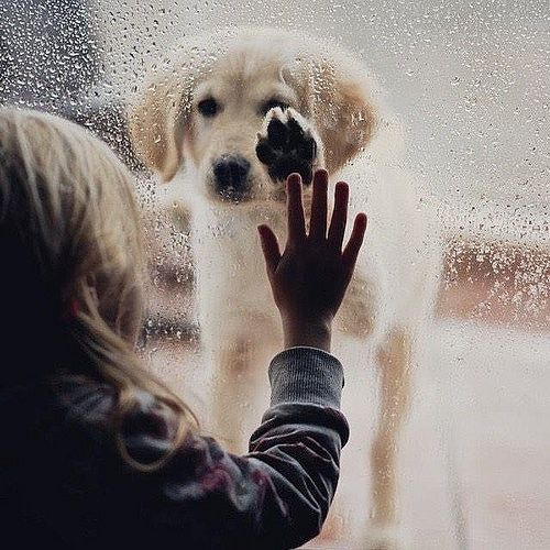 собака за окном
