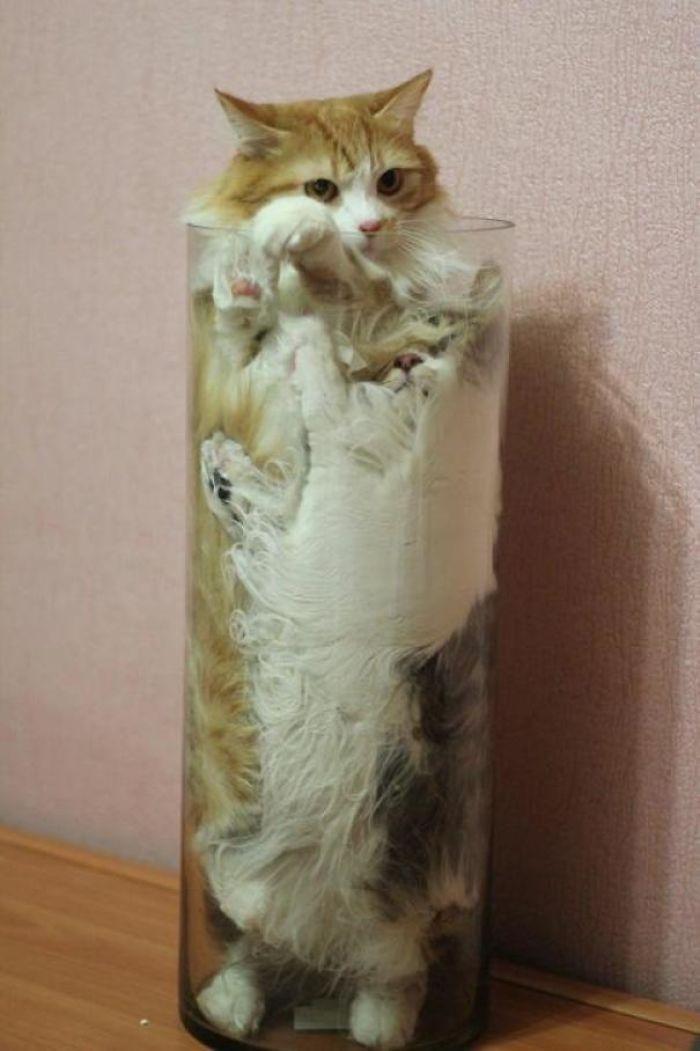 кот в вазе