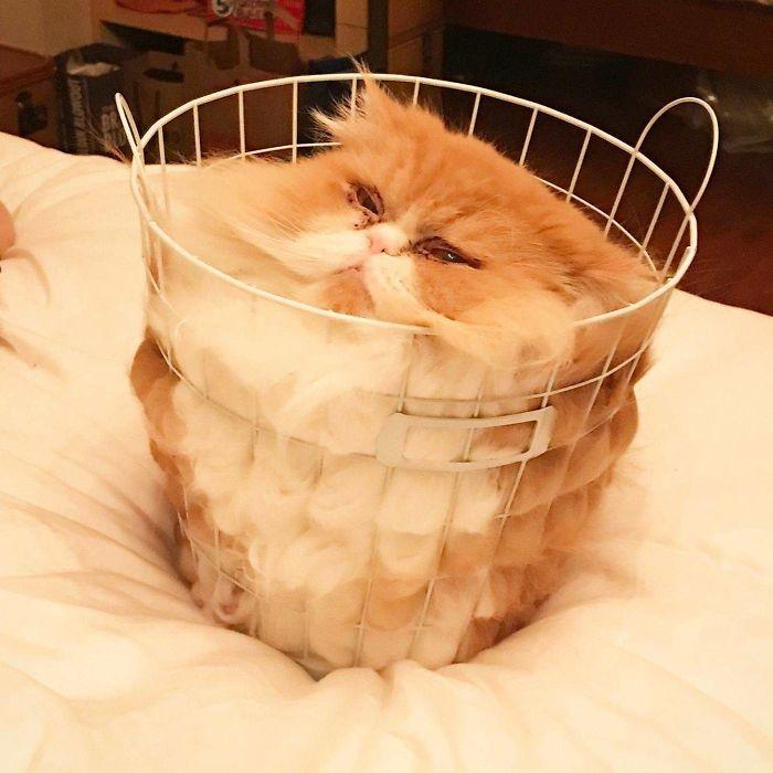кот в корзине для белья