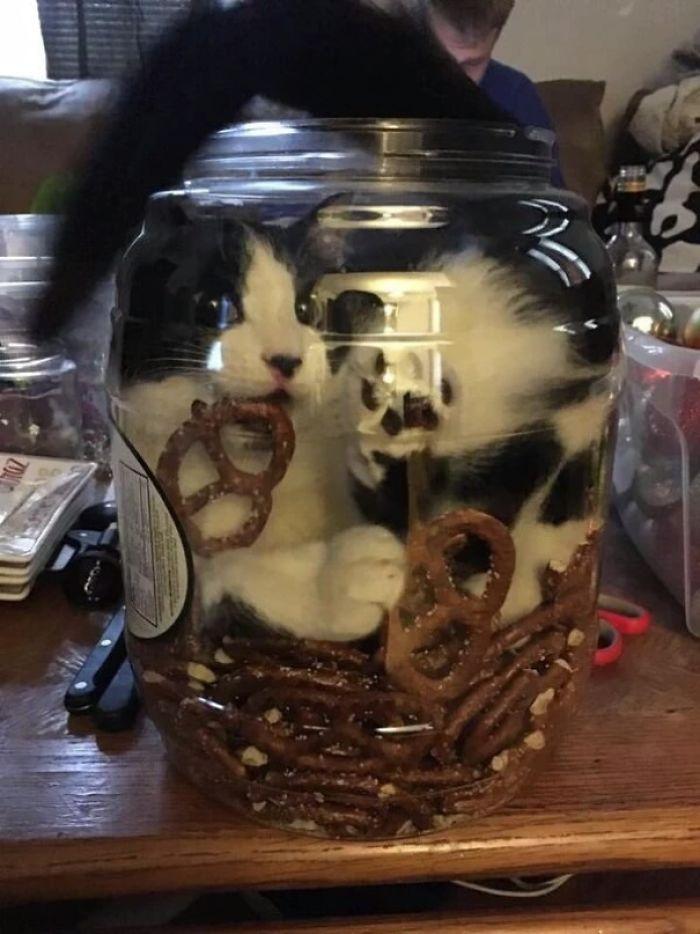 кот влез в банку рис 2