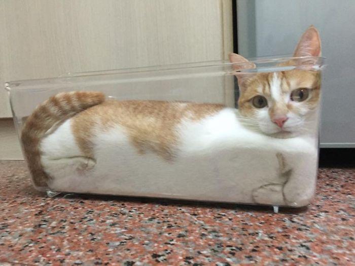 кот в вазе рис 2