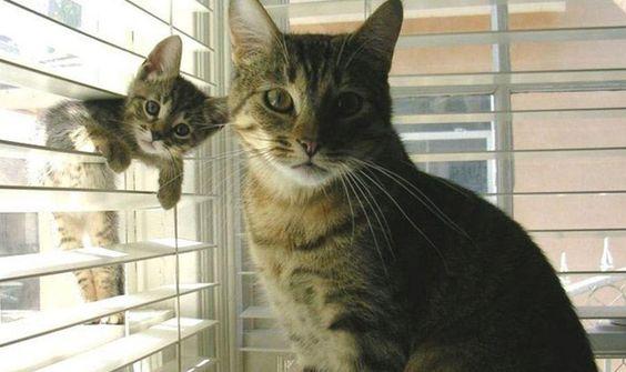 кошка с котенком на окне