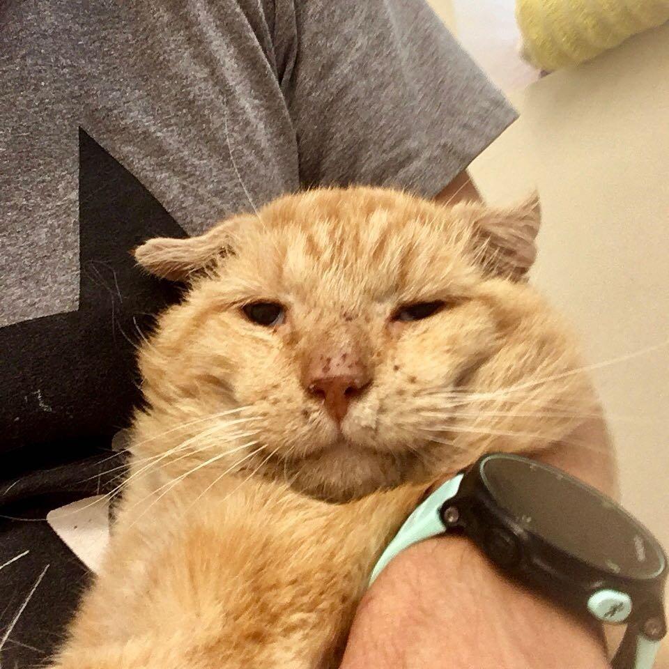 рыжий кот в больнице