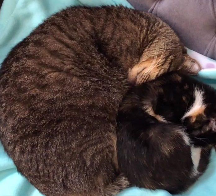 кот спит с котенком