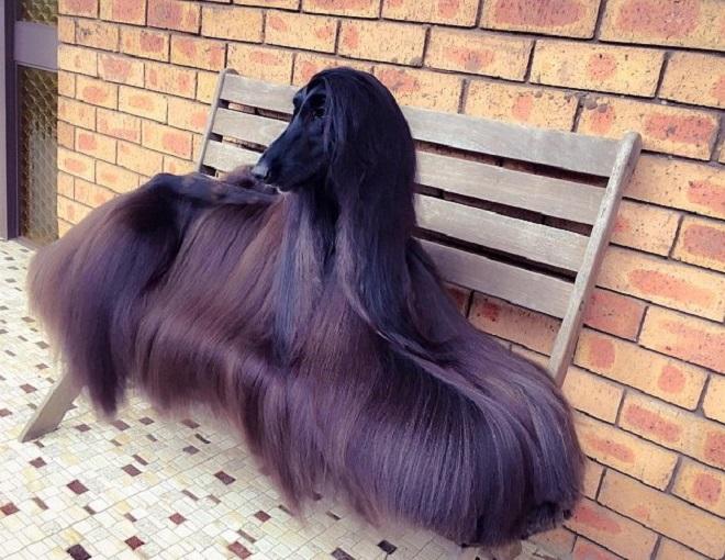 Собака на лавке