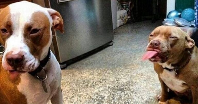 Arguing dogs