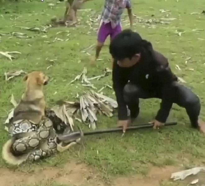 Собака, змея и мальчик