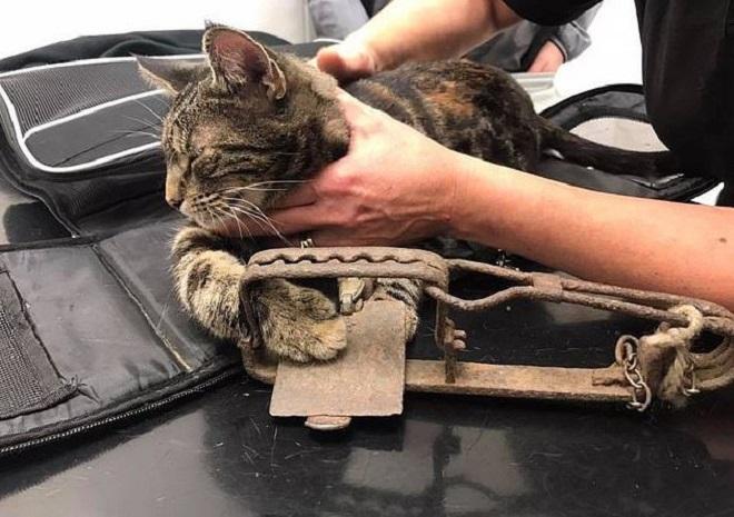 Кошка в капкане