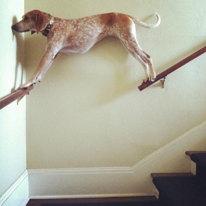 Собака стоит на поручнях