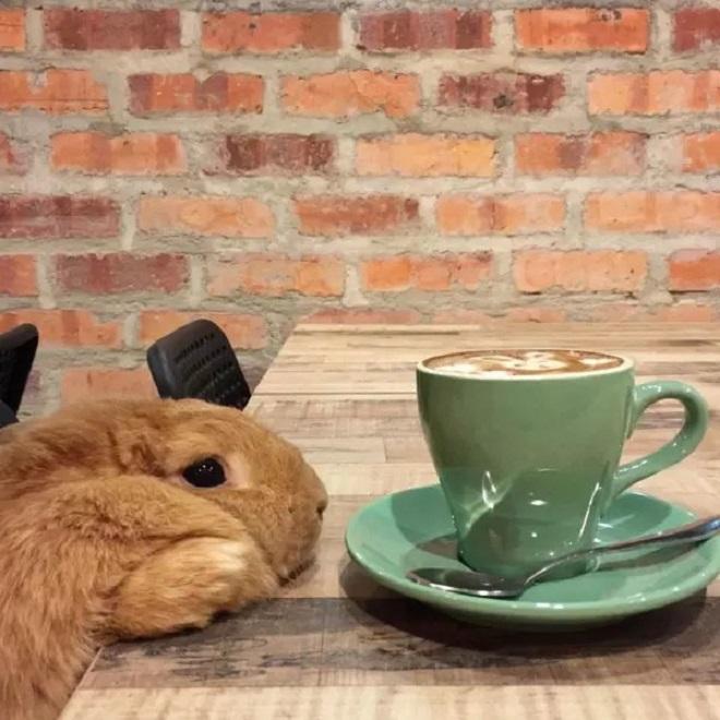 Кролик и чашка