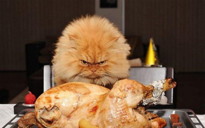 Кот настраивается на еду