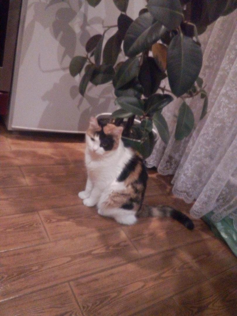 кошка в доме рис 2