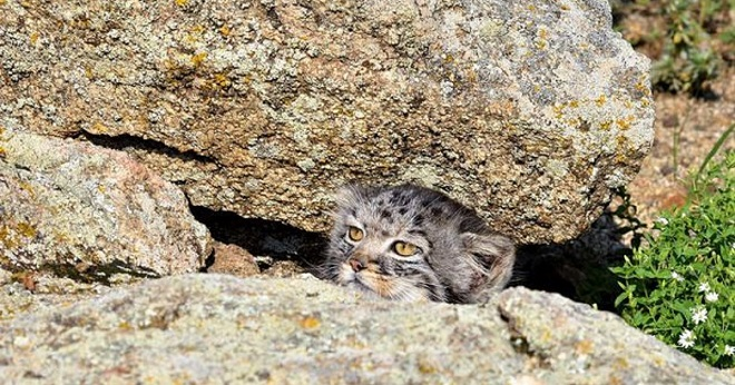 Котенок в камнях