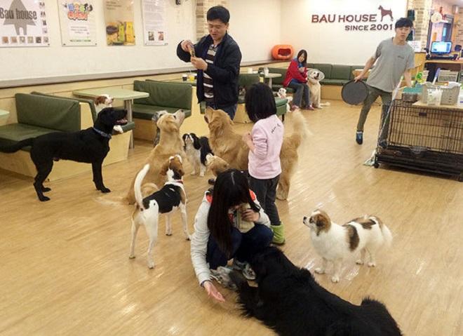 Собаки возле людей