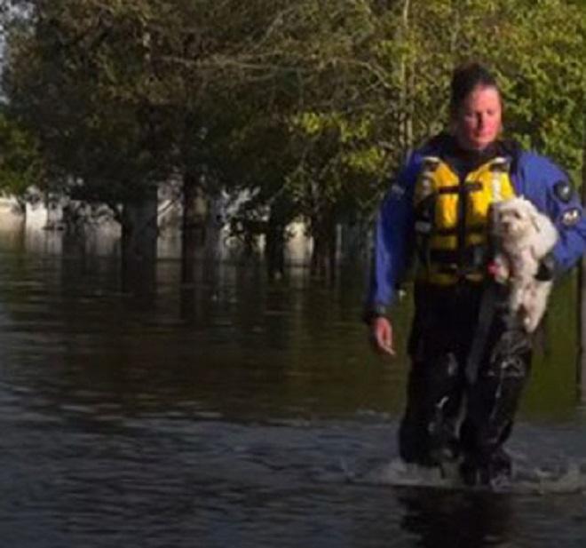 Спасатель несет собаку