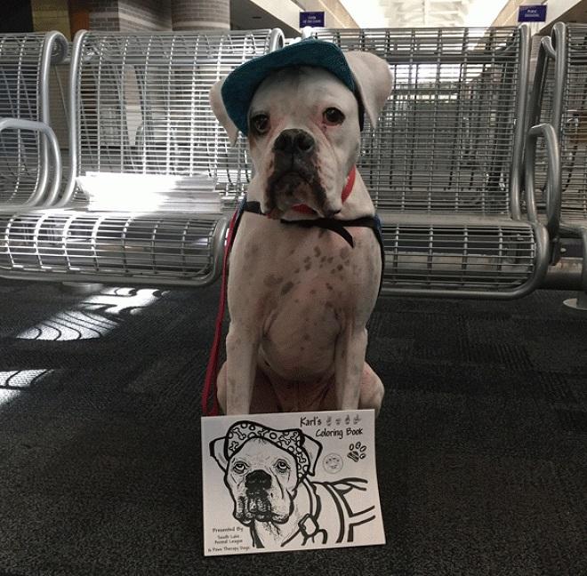 Собака с плакатом
