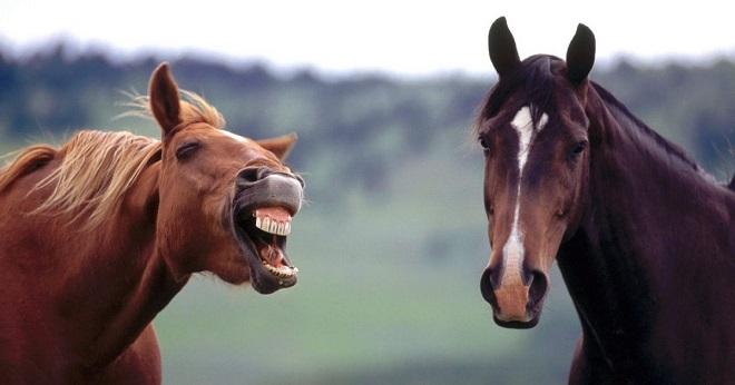 Смешные кони
