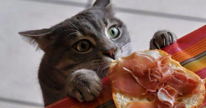 Кот хочет кушать