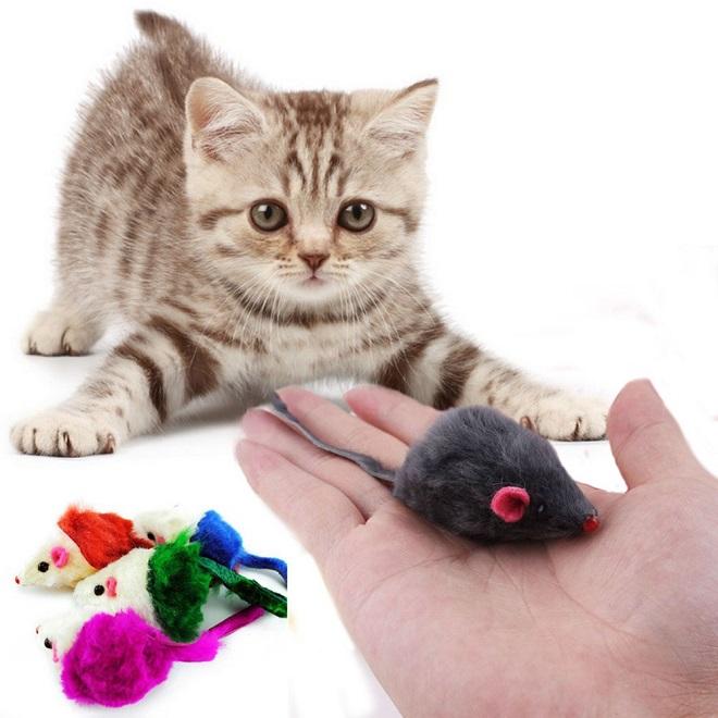 Котенку дают игрушку