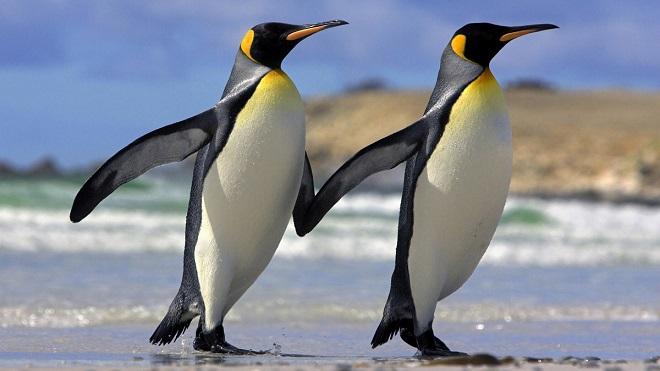 Пингвины держатся за руки