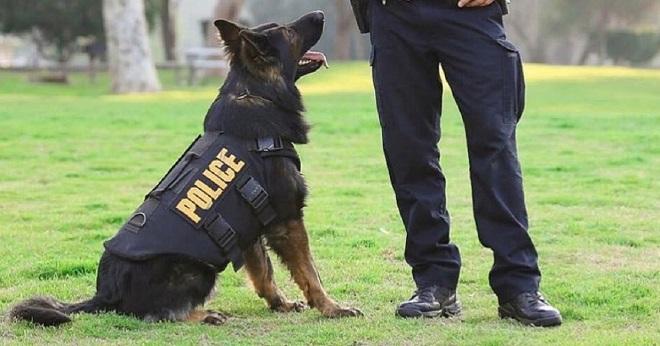 Собака полицейский