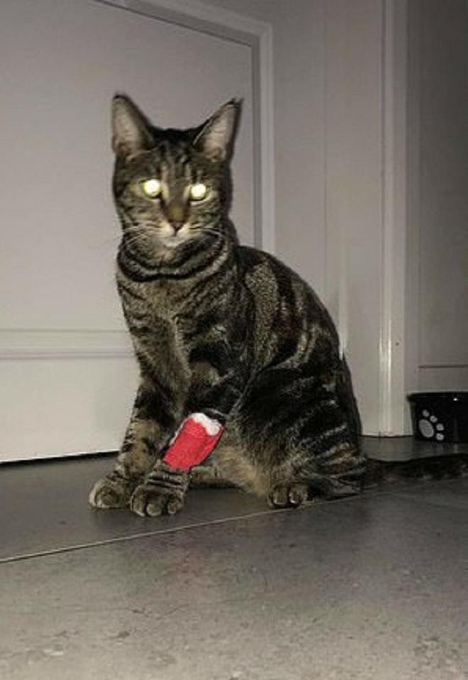 Кот со сломанной лапой