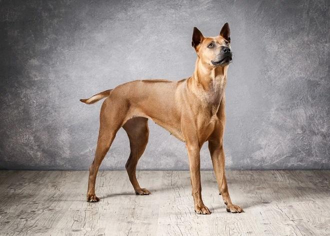 Собака в стойке рис 2