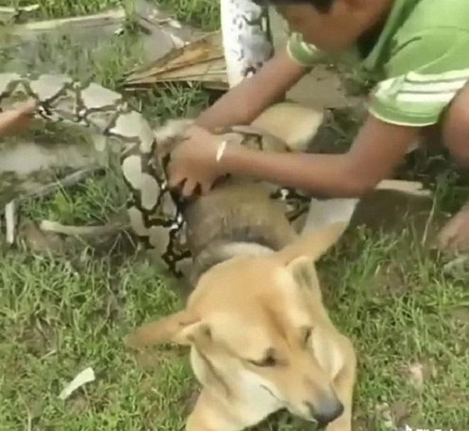 Мальчик снимает змею