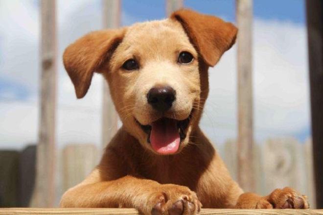 Радостный щенок