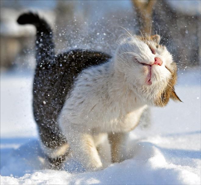Котик зимой