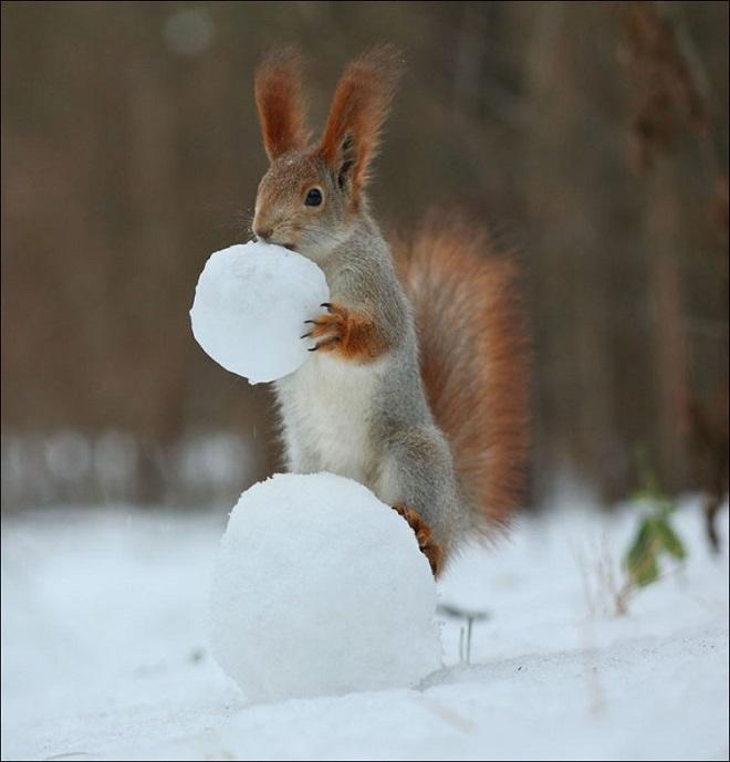 Белка и снег
