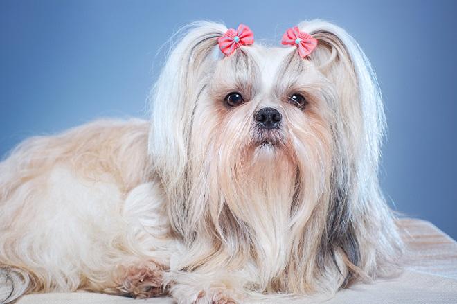 Собака с хвостиками