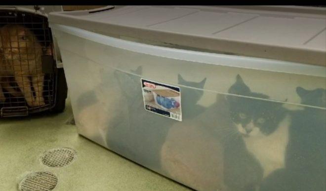 Контейнер с котами