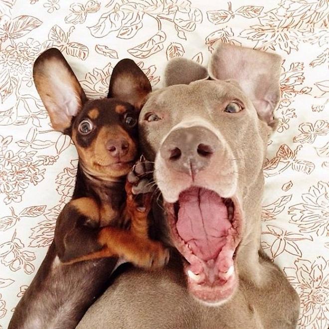 Собаки делают селфи