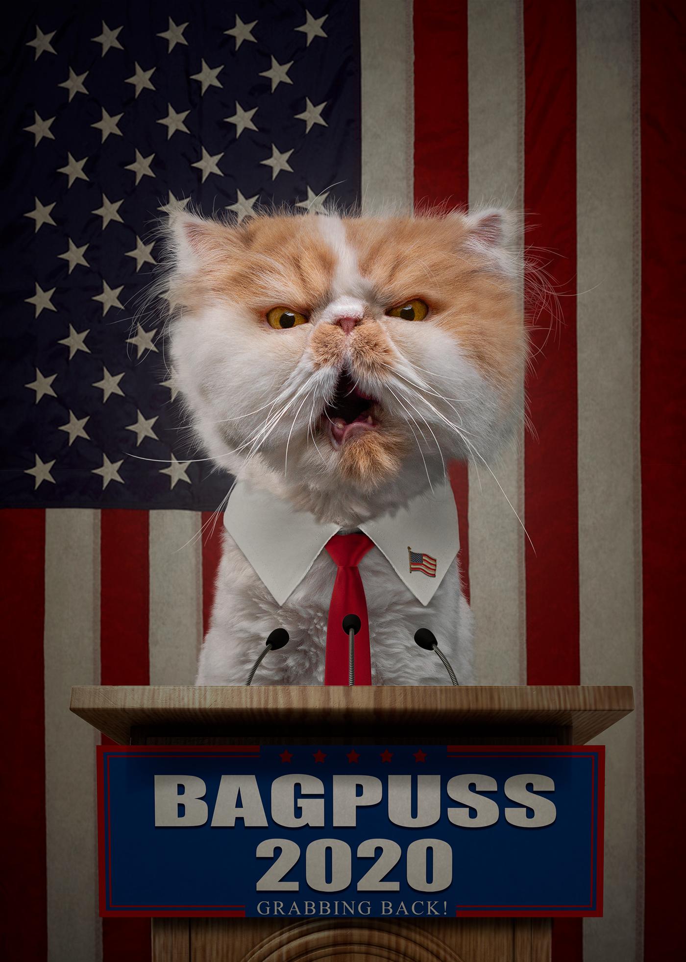 кот на выборах