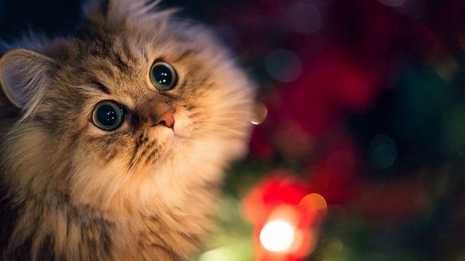 Кот с огоньками